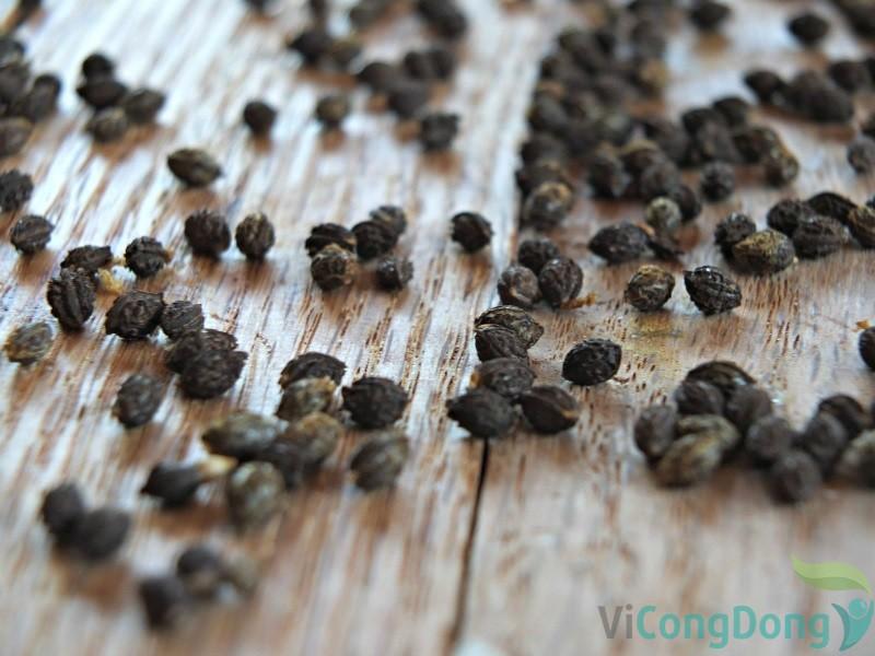 hạt đu đủ chữa gai cột sống