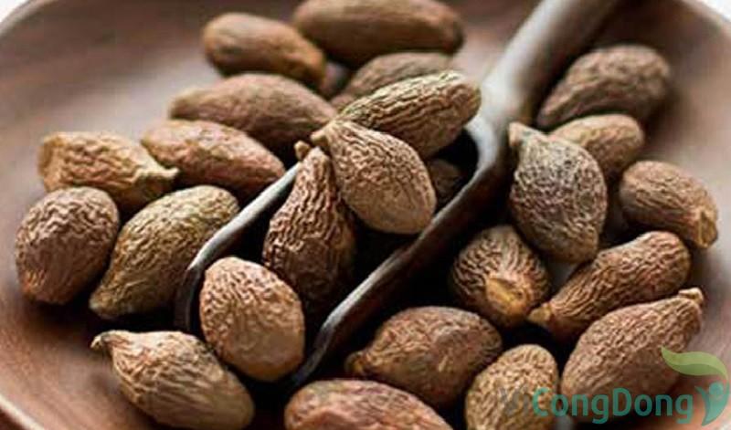 Cách chữa gai cột sống bằng hạt đười ươi