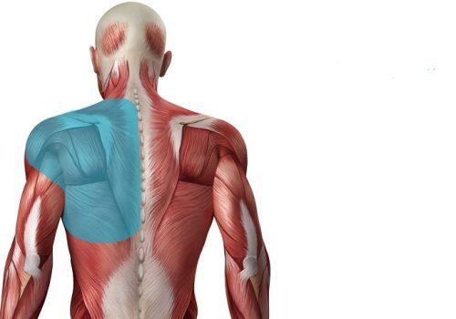 đau cơ lưng