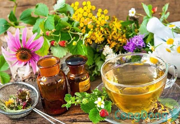 Bài thuốc đau dạ dày từ thảo mộc