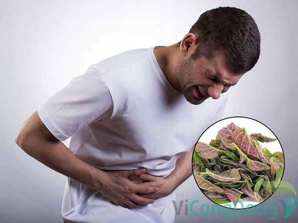 chữa đau dạ dày bằng lá mơ