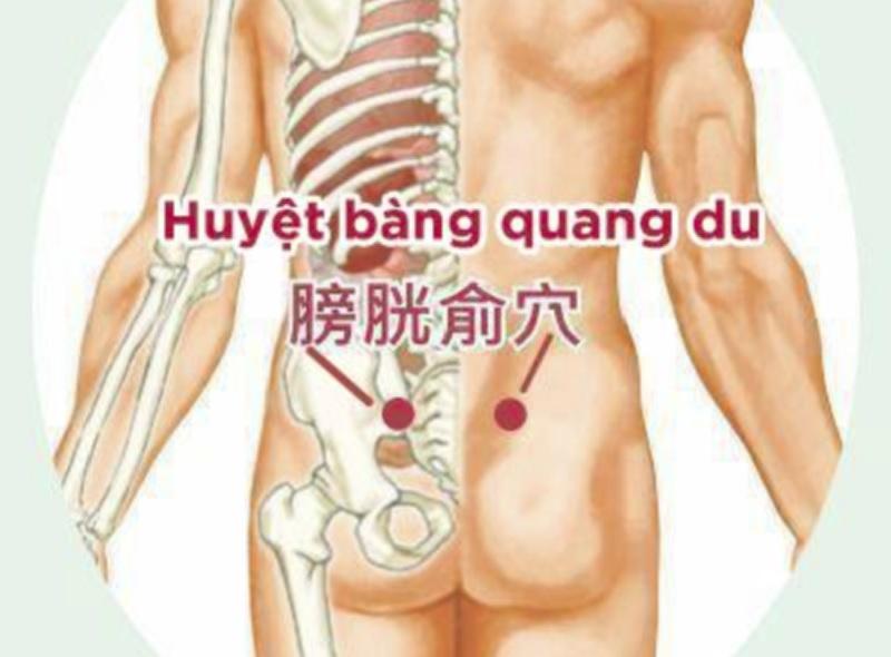 huyệt ở lưng tác động vào có tác dụng giảm đau lưng