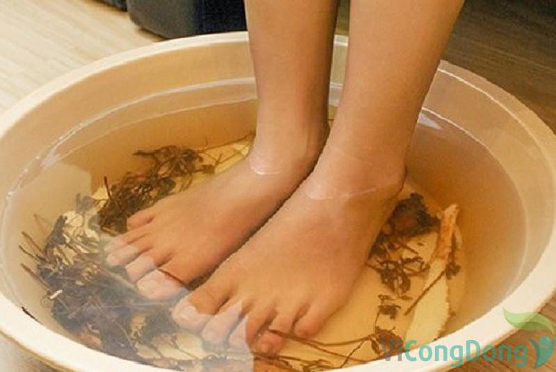 Bài thuốc ngâm chân lá ngải cứu chữa thoát vị đĩa đệm