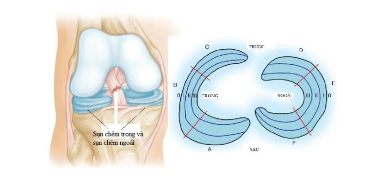 Sụn đầu gối - Giải phẫu khớp gối