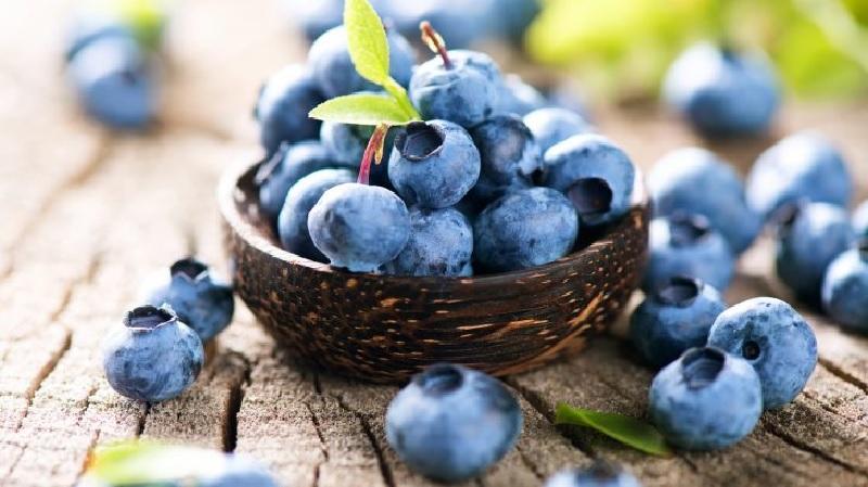 Bị suy thận nên ăn hoa quả gì? - Quả việt quất